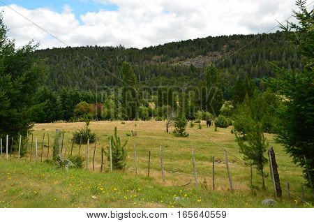 Patagonian Field with trees, animals and forest mountains behind in a cloudy afternoon.