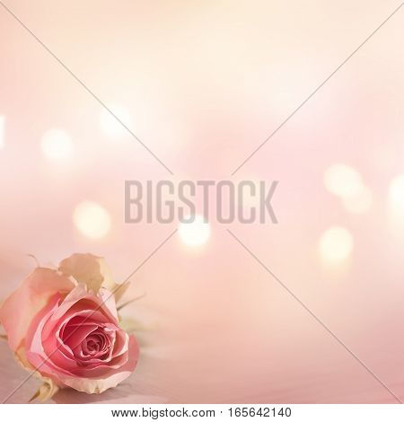 Still life with a tender rose and bokeh for a greeting card