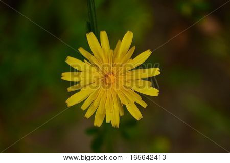 Yellow little flower in the middle of a dark scene in the forest