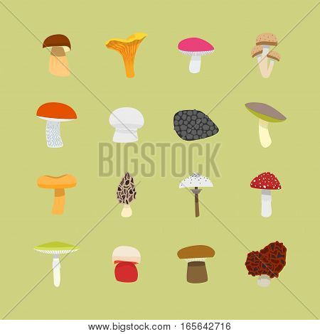 Cartoon Mushrooms Icon Set Flat Design Style Edible and Poisonous Nature Food. Vector illustration
