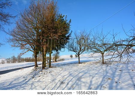 Snowy scenery with trees, street and blue sky