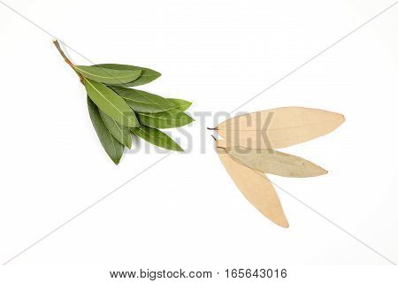 Bay leaf herb spice fragrant aromatic fresh raw dray