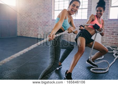 Shot of two young women doing exercises with rope at a gym. Fitness females pulling rope at gym.