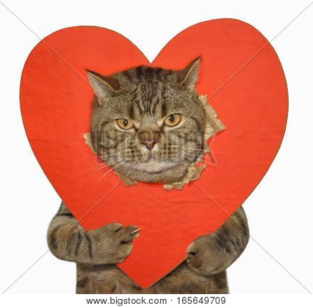 The bad cat shows his paw the sign of off against the background of a big red heart. White background.