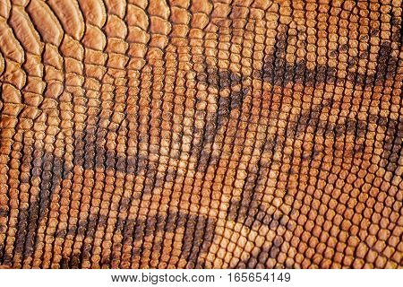 Texture of genuine leather close-up, with embossed scales of reptiles, the trend pattern