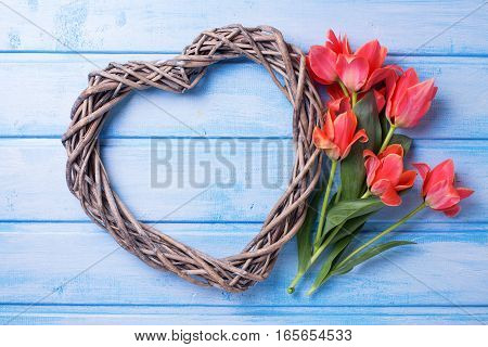 Decorative heart and aromatic spring tulips flowers on blue painted wooden background. Selective focus.Top view. Flat lay.