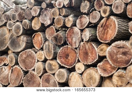 Well arranged cut dry oak firewood closeup aa background