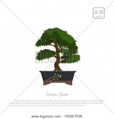 Bonsai tree in pot on white background. Text in japanese Bonsai