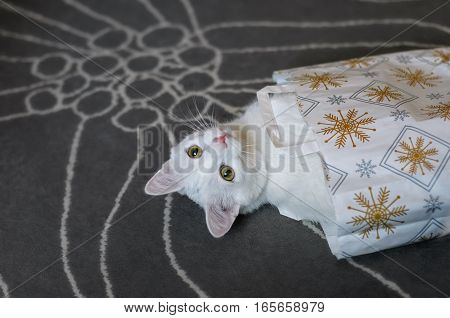 White naughty cat climbed into the bag