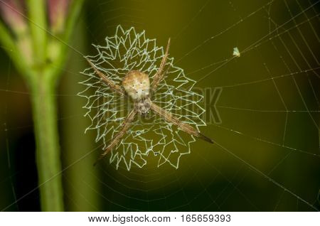 spider web with colorful brightness background natural