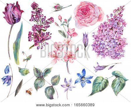 Spring Set vintage watercolor bouquet of pink roses, leaves, blooming branches of peach, lilacs, tulips, scilla, watercolor botanical illustration isolated on white background