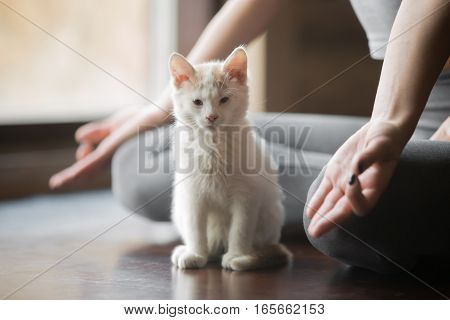 Young woman practicing yoga, sitting in Half Lotus exercise, Ardha Padmasana pose, working out, wearing sportswear, grey pants, indoor, home interior background, white cute cat near her, close up