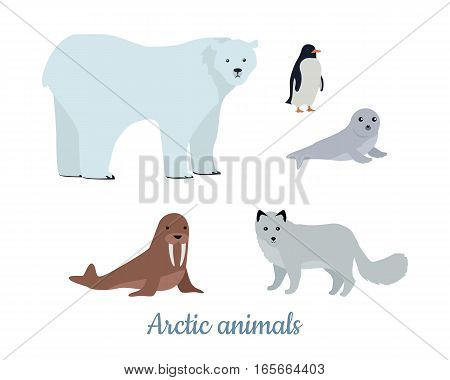 Set of arctic animals in flat design. Wild herbivorous and predatory species. Polar beer, seal, polar fox, walrus, penguin illustrations. For nature concepts, children s books, printing materials