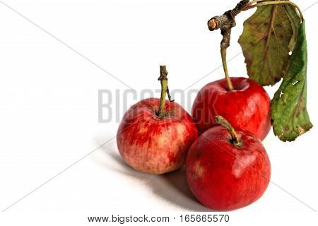 Closeup of tiny red apples on a white background