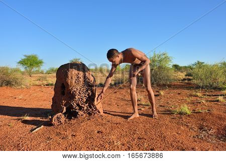 KALAHARI NAMIBIA - JAN 24 2016: Bushman hunter near termite mound. The San people also known as Bushmen are members of various indigenous hunter-gatherer peoples of Southern Africa