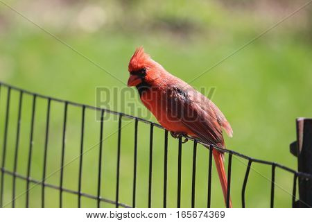 Colorful bird sitting on the edge of fence to fly