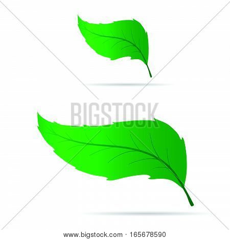 Leaf Set Green Design Illustration On White