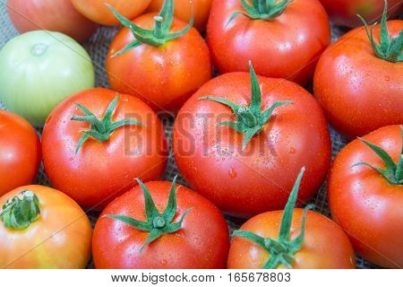 Ripe tomatoes with water droplets closeup. Vegetable background.
