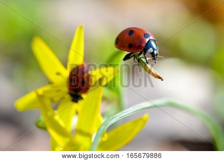 Ladybug on top of grass in natural light