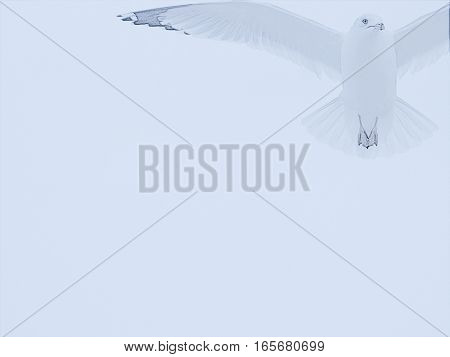 The seagull is poised and ready to fly out of the frame, which may be used as a pale blue background.