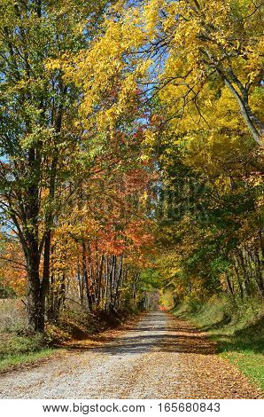 Leaf covered Country road on an Autumn day