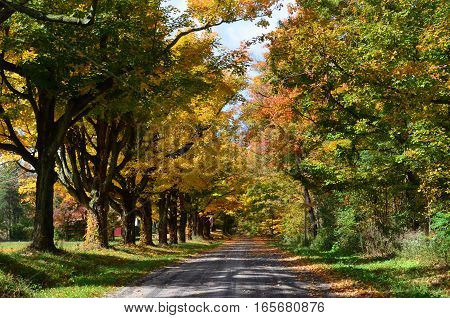 Row of colorful trees along a country road on an Autumn day