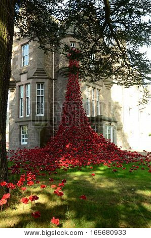 A view of a poppies display at a castle in Perth
