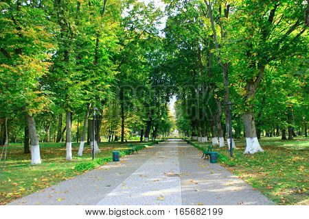 Autumnal park with promenade path big trees and bushes