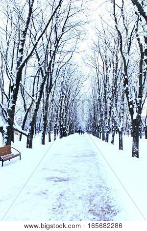 beautiful winter park with many big trees and path
