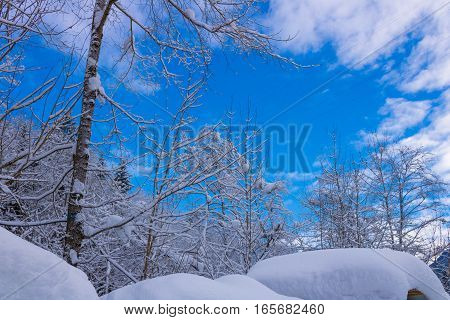 winter in the forest of austria alps