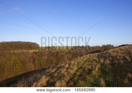 a valley with evergreen and deciduous trees and sloping grazing pastures in a yorkshire wolds landscape under a clear blue sky in winter