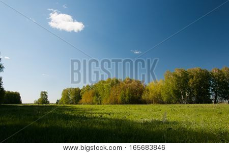 Autumn Forest, Green Meadow And Blue Sky