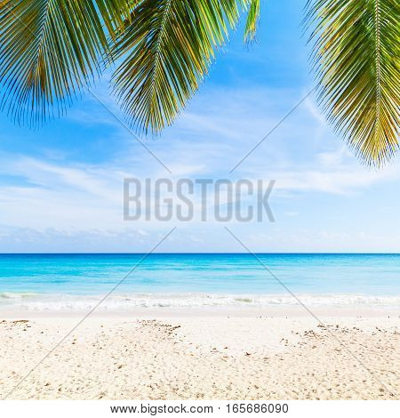 Tropical Beach Background, Sand, Palms