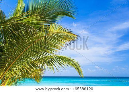 Palm Leaves Closeup Photo