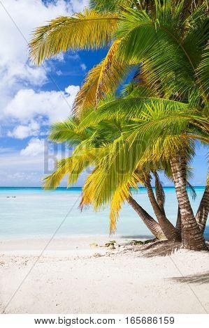 Coconut Palms Grow On White Sandy Beach