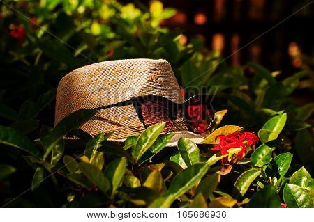 The bright sunny picture backgroundtexture of the straw white hat with red glasses spectacles on the bush in warm tones with red flowers