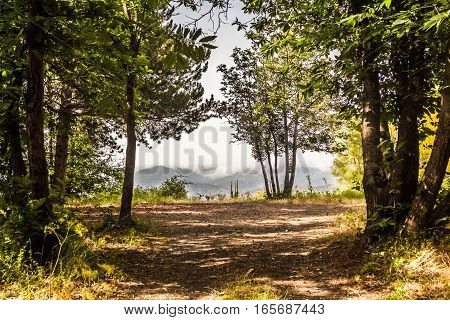 Mountains behind the cleft in the forest.Green forest path ending with a view of a far foggy mountains
