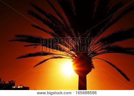 Palm tree silhouette at sunset with vivid orange color.