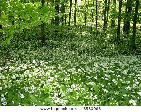 Frühling-Wald