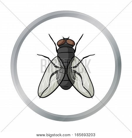 Fly icon in cartoon design isolated on white background. Insects symbol stock vector illustration.