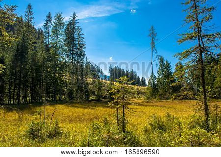 Sunlit Bog with Forest in Scenic Austria