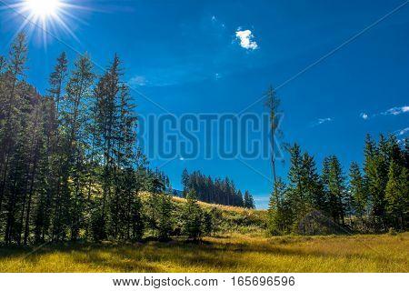 Sunlit Bog with Forest in Scenci Austria