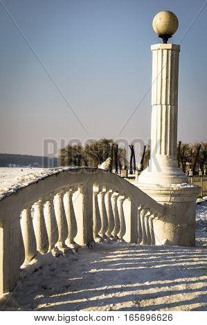 animals in winter dove basks in  sun in the Park