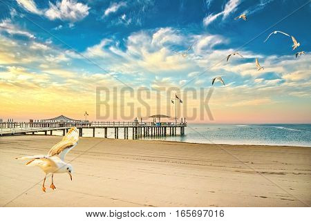 Sea gulls over the beach at sunset on a beautiful evening sky