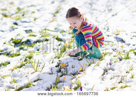 Little Girl With Crocus Flowers Under Snow In Spring
