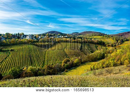Settlement with Houses at Vineyard in Autumn in Austria