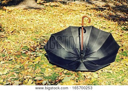 Overturn black umbrella on yellow foliage in autumn park.