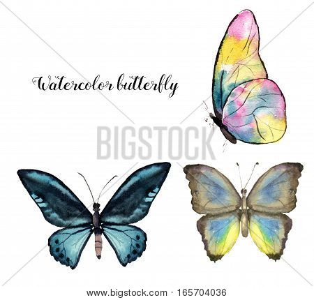 Watercolor butterfly set. Hand painted insect collection isolated on white background