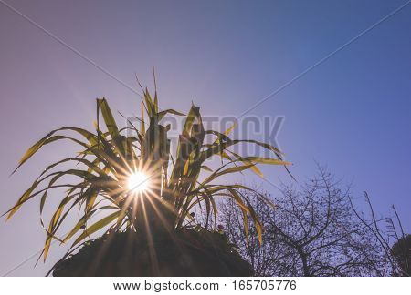 Sun rays shining through the plant leaves in the Regents park in London