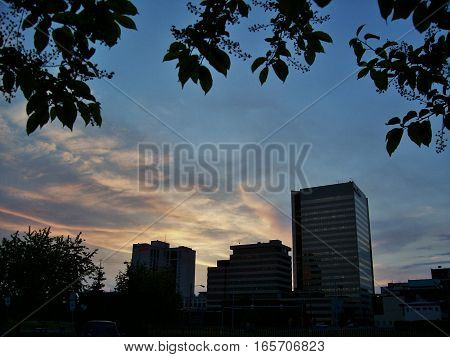 Cityscape at sunset with leaves and buildings silhouetted against the clouds. Anchorage Alaska at dawn or dusk with skyscrapers  and leaves framing the sunset